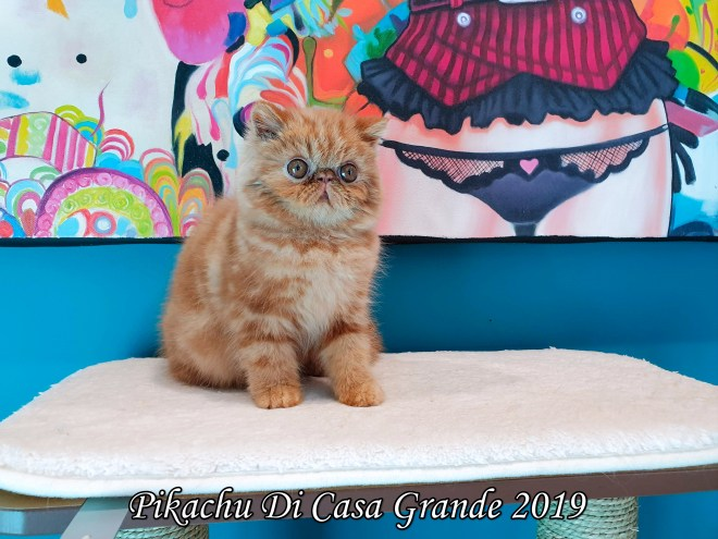 Pikachu Di Casa Grande (1004 sur 26)