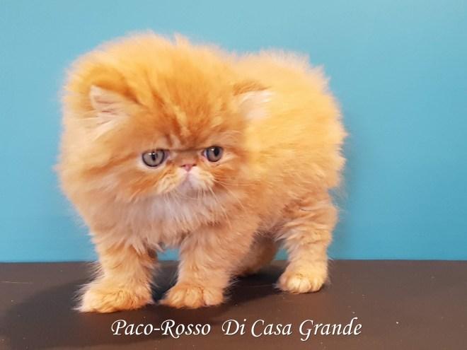 PACOROSSO Di Casa Grande (106 sur 24)