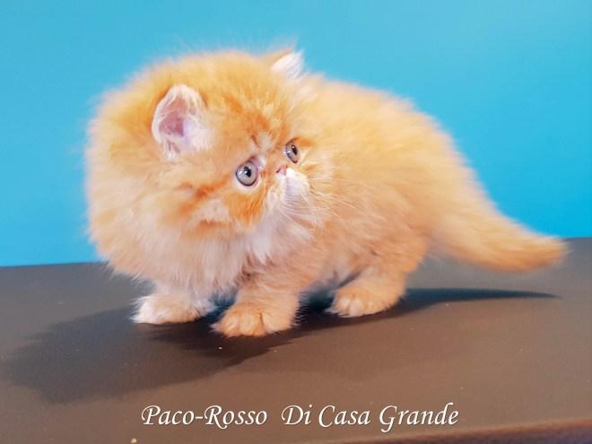 PACOROSSO Di Casa Grande (111 sur 24)