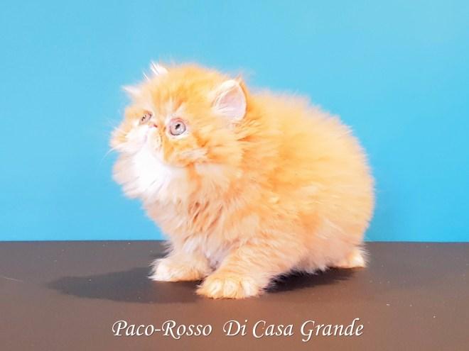 PACOROSSO Di Casa Grande (115 sur 24)