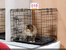 PARIS-ANIMAL-SHOW-TICA-2020 (8 sur 27)