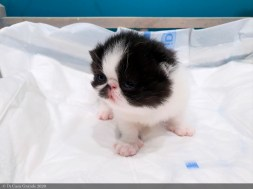 BICO-BLACK-WHITE-LOLLIPOP-2-weeks (2 sur 30)