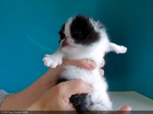 BICO-BLACK-WHITE-LOLLIPOP-2-weeks (22 sur 30)