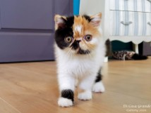 CHATONS-CHAMBRE-2020-AVRIL (1009 sur 11)