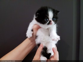 LOLLIPOP-BICO-BLACK-WHITE-3-weeks (100 sur 1)