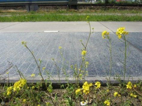 ciclovia-solar-solaroad-2