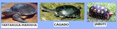 """Entenda as diferenças entre as """"tartarugas, cágados e jabutis""""?"""