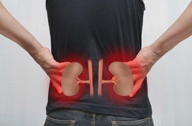 Resultado de imagem para remedio natural para rins