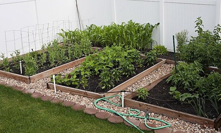 Veja o motivo para cultivar uma horta em sua casa
