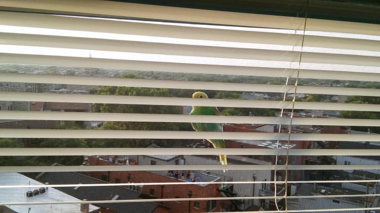 Parakeet Lands, Summer 2018.