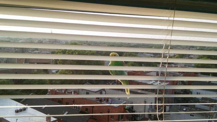 The Parakeet Lands, Summer 2018.