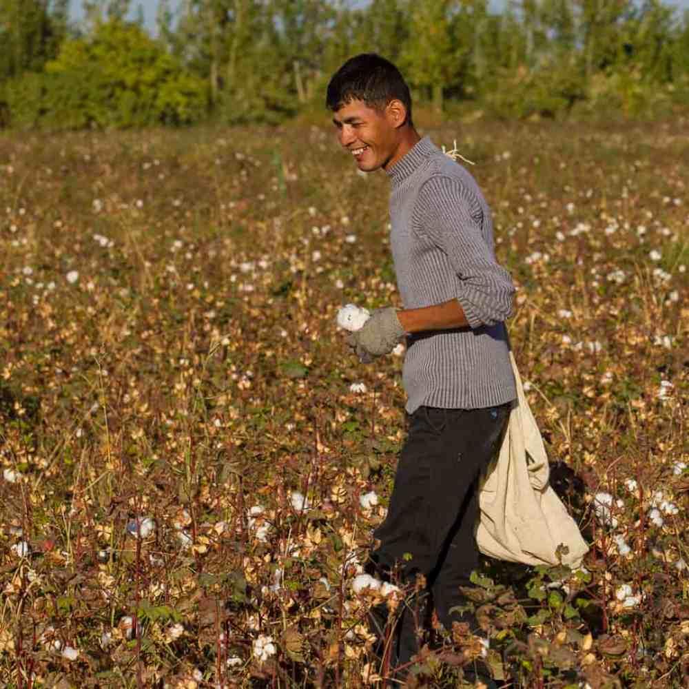 Des jeunes gens assurent la récolte du coton ...
