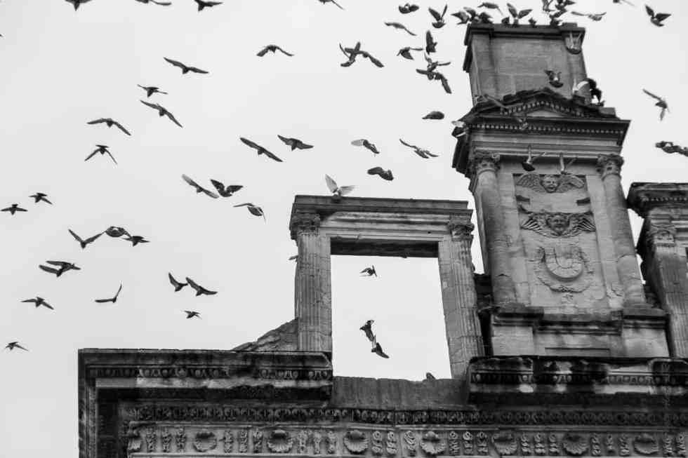 Les ruines du châteaux sont le repaire des oiseaux.