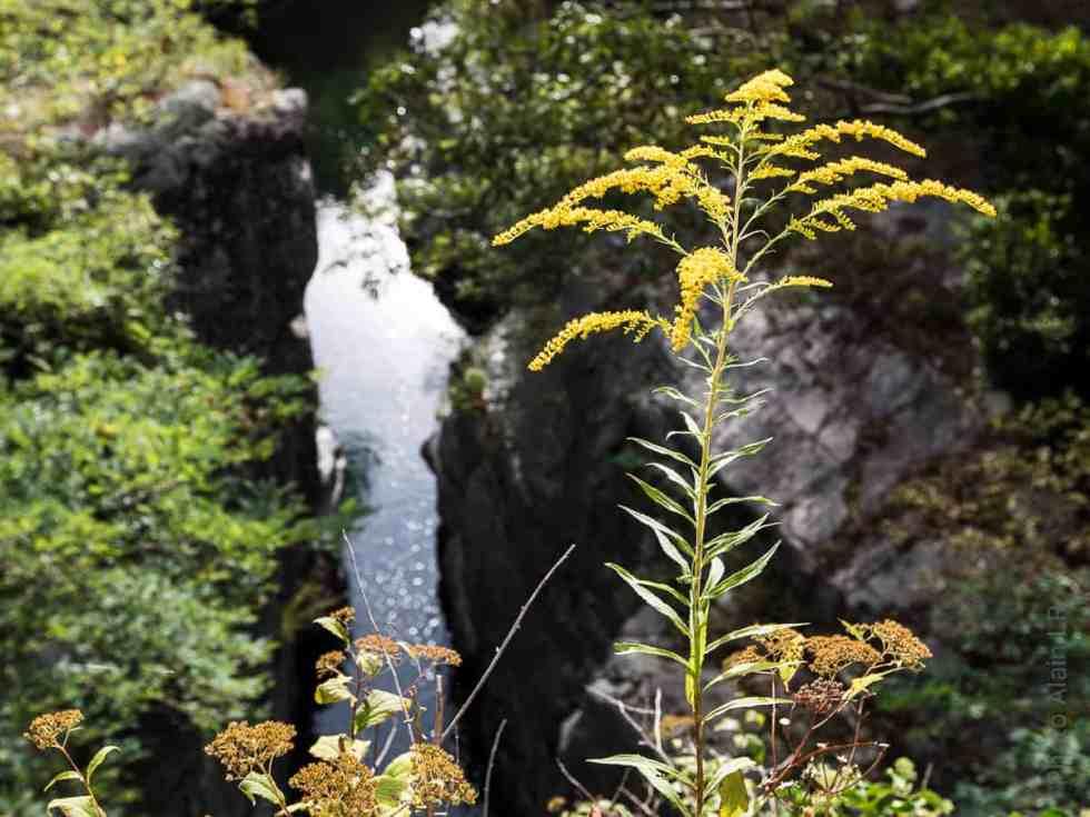 Nature sauvage de la Haute Ardèche