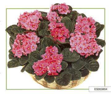 Aqui Flores no Facebook
