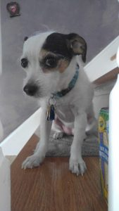 a tiny rather adorable mutt sits on a stair