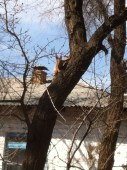 The first squirrel I saw when I came back to Bishkek in March.