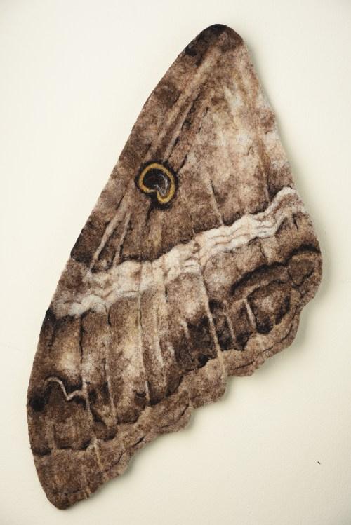 lana afelpada sobre fieltro, montada en bastidor de madera