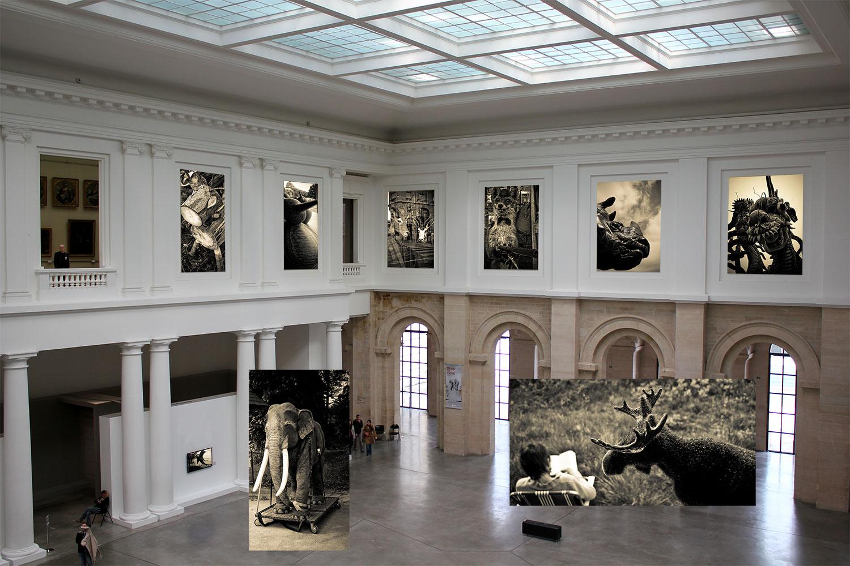 Le Palais des beaux-arts de Lille accueille les animaux de Didier Gualeni