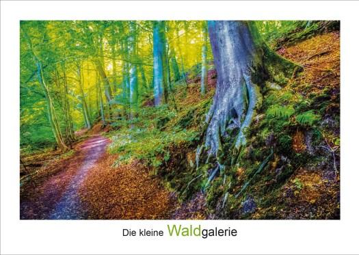 """Das Waldmotiv """"Zugabe"""" zeigt einen Waldweg mit Baumstämmen und dicken Baumwurzeln"""
