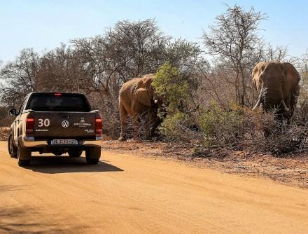 Dickhäutiges Publikum: Beim Ausflug in den Krüger-Nationalpark begegneten die Teilnehmer stattlichen Elefanten. © VW