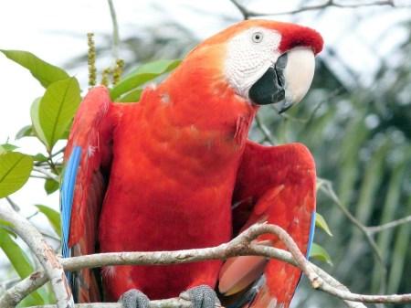 Papagei im brasilianischen Dschungel. © Gebeco Länder erleben