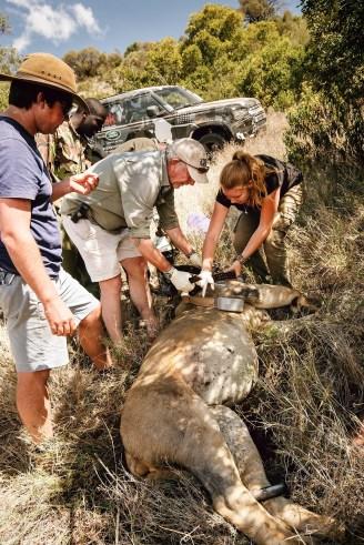 Die Tier- und Naturschutzorganisation Tusk nutzt im kenianischen Borama-Reservat einen noch getarnten Land Rover Defender für die Arbeit. Foto: Auto-Medienportal.Net/Land Rover