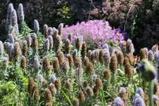 Wo man auch hinsieht - Blumen und Blüten.