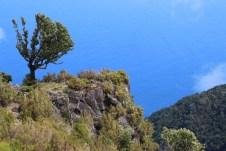 Üppige Vegetation auf Madeira.
