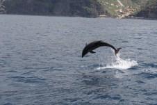 """Auf Bootsausflügen mit """"On Tales"""" bekommen die Gäste nahen Kontakt mit Walen oder auch Flaschennasen-Delphinen."""