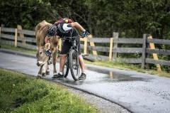 Zwischendurch unterbrechen die Rinder gern die Fahrt und bitten um Streicheleinheiten. Foto: Stefan Voitl