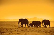 Auf der Fernstrecke liegt Tansania zur Zeit im Trend. © Thomas Cook