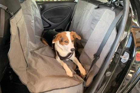 Hundetransport im Auto: Die Decke verhindert das Verschmutzen des Rücksitzes, schützt aber nicht ausreichend bei Brems- oder Ausweichmanövern. Foto: Auto-Medienportal.Net/ADAC