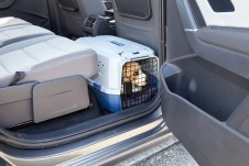 Hundetransport im Auto: So reist Struppi sicher. Die kleine Box ist gut verstaut, bei Brems- und Ausweichmanövern droht Hund und Mensch kein Schaden. Foto: Auto-Medienportal.Net/ADAC