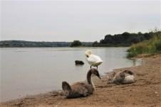 Die Westerwälder Seenplatte bietet neben zahlreichen Wasservögeln auch Campern auf drei Plätzen eine idyllische Bleibe. © Sohnemann