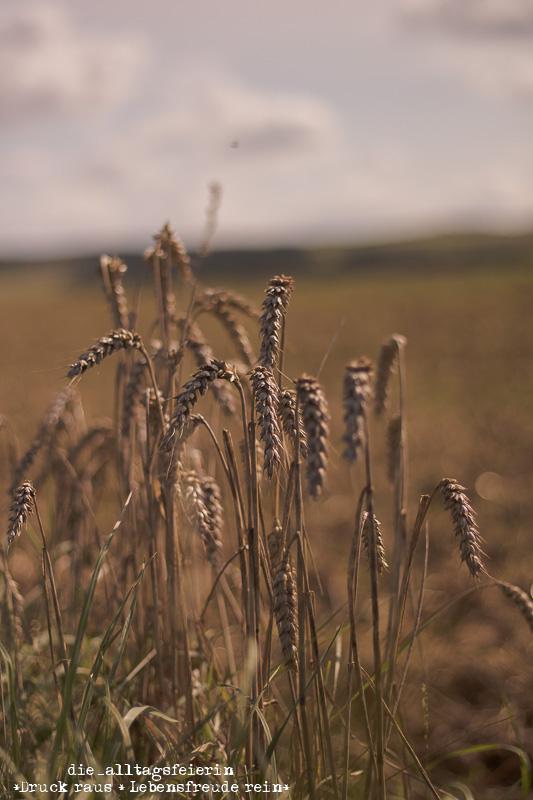 laufen, Getreide, Wochenglückrückblick,abgeerntete Felder