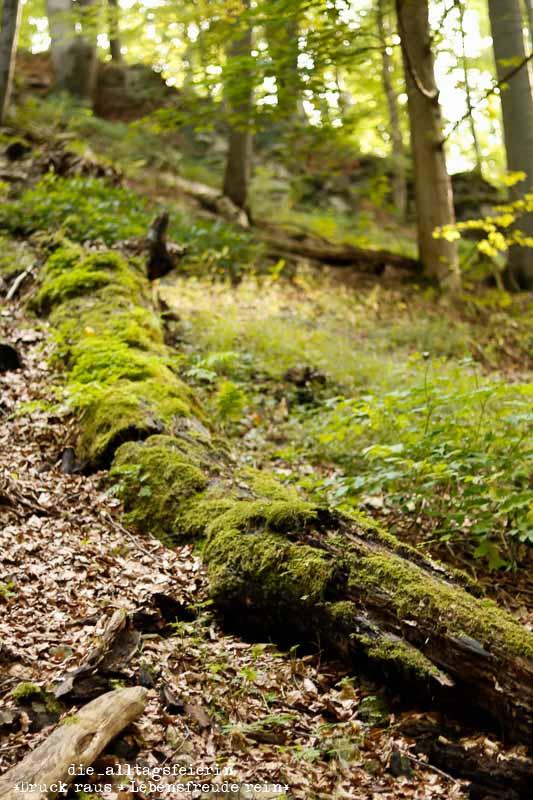 Hochrhöner, Wanderlust, wandern, Rhön, Wald, Moos