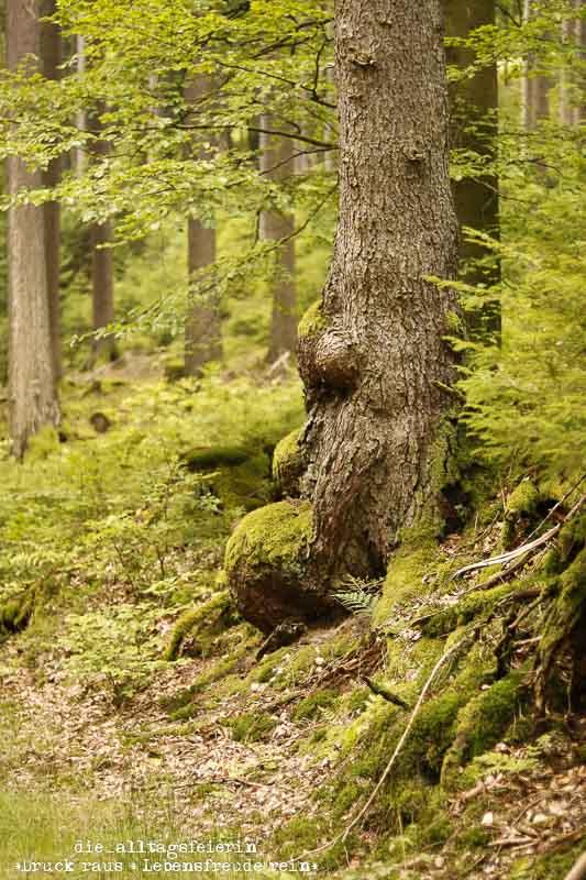Rhön, Thüringen, Hochrhöner, Wald, Wanderlust, wandern