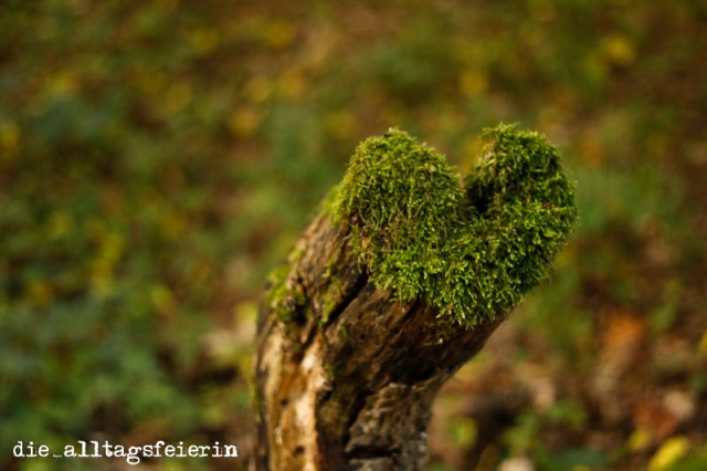 Wald, Natur, Naturfotografie, Herz, Moos