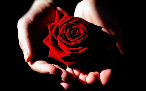 Rose (Bild: Pixabay)