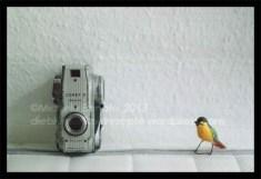 camerabird