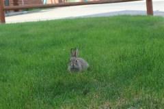 Kaninchen am Hotel