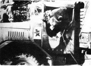 482px wojtek in truck