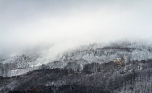 forest mist winter wallpaper 1280x800 1