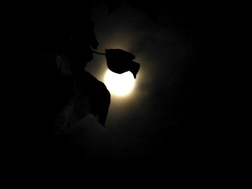 noche2.htm