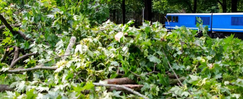 Foto von der Parkeisenbahn im Großen Garten Dresden, das auch noch einen umgestürzten Baum zeigt, der zuvor von den Gleißen entfernt wurde.
