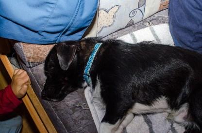 Foto von einem Hund der gerade schläft.