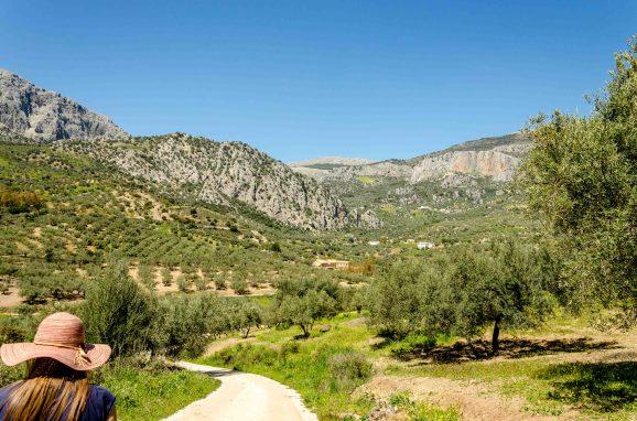 Foto von Landschaft mit Olivenbäumen, vereinzelten Häusern und Bergen.