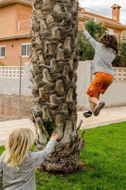 Kind springt von Palme.