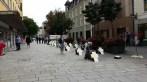 Passau 19. August 2014